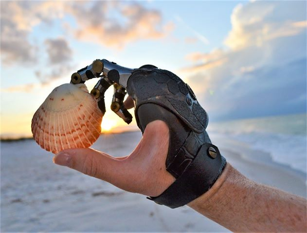 Point Digit User Holding a Seashell